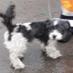 Found dog on 06 Feb 2019 in Greenogue Bus,Park,. found, now in the dublin dog pound...Date Found: