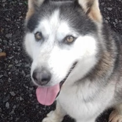 Found dog on 06 Feb 2019 in summerhill. found...Meath Dog Shelter