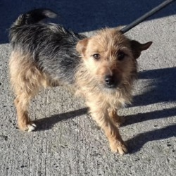 Found dog on 06 Feb 2019 in trim. found...Meath Dog Shelter February 1 at 2:08 PM ·  STRAY REF 34 Fairy FOUND ST. MARY'S PRIMARY SCHOOL TRIM FEMALE NO COLLAR NOT CHIPPED Proof of ownership Required Phone 0870973911 10-2.30pm Mon - Sat