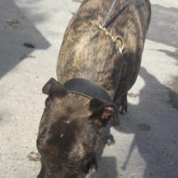 Found dog on 06 Sep 2018 in N7. found, now in the dublin  dog pound...Date Found: 05/09/2018 Location Found: N7