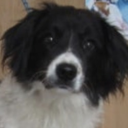 Found dog on 06 Sep 2019 in Avoca.. found...Wicklow Dog Pound 13 mins ·  Jill (pound name) is female collie crossbreed found in Avoca. Please contact Wicklow Dog Pound at 0404 44873 for further information.