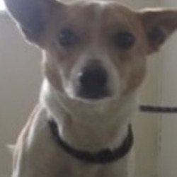 Found dog on 06 Sep 2021 in coolboy. found.. Wicklow Dog Pound SgtrrfedpcetSemSmbpgmerto 3enrS at 9siofo:r41ce AnfMmadn  ·  Tom (Pound Name) Is a male Jack Russell found in Coolboy. For further information please call Wicklow Dog Pound on 0404 44873. Thank you