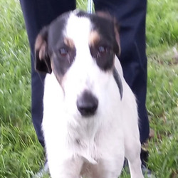 Found dog on 06 Sep 2021 in dublin. found... Harrison    Dun Laoghaire County Council    Harrison is a male Lurhcer Cross and he came to   us  as a  stray from Dundrum on 2/9/21.  He is   roughly 2/3 years  old.   He   is a   friendly, placid   dog. He is not microchipped and we are currently   looking for his owner.