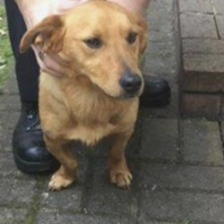 Found dog on 07 Apr 2019 in naas. found..K.W.W.S.P.C.A. 2 hrs ·  FOUND IN NAAS, CO. KILDARE  These two dogs were found yesterday near Craddockstown Golf Club, Naas. Currently at Naas Garda Station. Call 045 884300 if you know who owns them. They are not microchipped but are in good health and well fed. Proof of ownership will be needed.