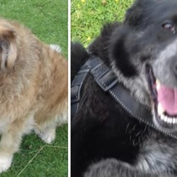 Found dog on 07 Aug 2019 in Skyrne/Rathoath. found..Meath Dog Shelter 9 mins ·  Ref 228 and 229 These older girls were picked up on the Skyrne/Rathoath road. The golden girl is chipped but not registered. Please share to help these girls home. Contact 0870973911 with any information