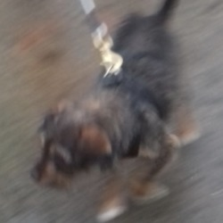 Found dog on 07 Dec 2018 in Rossfield Tallaght. found, now in the dublin dog pound...Date Found: 05/12/2018 Location Found: Rossfield Tallaght