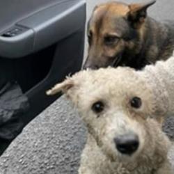 Found dog on 07 Dec 2019 in ballyfermot. found T.N.R West Dublin