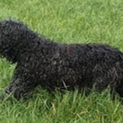 Found dog on 07 Dec 2019 in Monasterevin. found...K.W.W.S.P.C.A. · 2 hrs ·    Share share share to find owner...dog is blind  FOUND NEAR MONASTEREVIN/RATHANGAN, CO. KILDARE  Found wandering a field near Monasterevin and Rathangan. Will bring for a microchip scan and vet check as soon as I can.