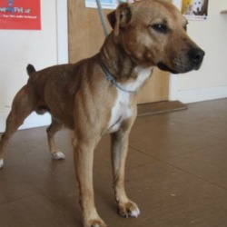 Found dog on 07 Jun 2018 in Rathdrum . found..is a male crossbreed found in the Rathdrum area. Please contact Wickow Dog Pound at 0404-44873 for further details.