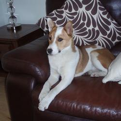 Found dog on 07 Mar 2010 in cabra navan rd d7. found 7th march navan rd cabra d7 area.. female jackrussell cross. very friendly