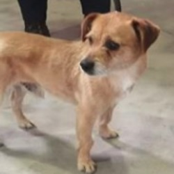 Reunited dog 07 May 2020 in duleek. UPDATE REUNITED....found..Meath Dog Shelter 1 min ·  STRAY REF 76 Found Duleek Male nó collar not chipped PHONE 0870973911 10am to 3pm Proof of ownership and reclaim fee required to reclaim