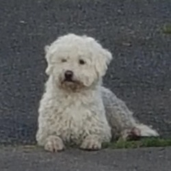 Found dog on 07 Oct 2019 in Clondalkin. found...to Dog walking and socializing - Dublin and surroundings 3 mins ·  Dog found Deansrath Road, Clondalkin. Back leg injured. Male, very friendly. Bringing to Castle Veterinary Clinic in the village.