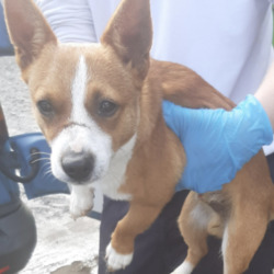 Found dog on 07 Sep 2020 in Tallaght. found, now in the dublin dog pound...Date Found:
