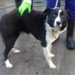 Found dog on 08 Jan 2018 in Red Cow , Luas .. found, now in the dublin dog pound... Date Found: