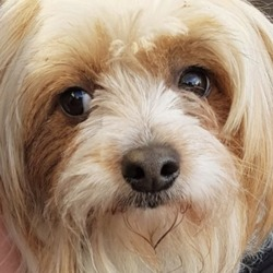 Found dog on 08 Jan 2019 in Blessington . found..DSPCADSPCA Lost & Found Pets Page Liked · 4 hrs ·    ***FOUND PETS AT THE DSPCA***  2 x terriers (male and female) found 06/01/19 in Blessington Co Wicklow.   Please share.