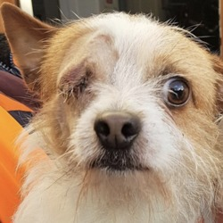 Found dog on 08 Jan 2019 in Blessington Co Wicklow.. found,,... DSPCADSPCA Lost & Found Pets Page Liked · 4 hrs ·    ***FOUND PETS AT THE DSPCA***  2 x terriers (male and female) found 06/01/19 in Blessington Co Wicklow.   Please share.