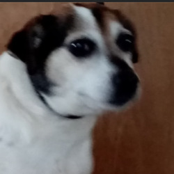 Reunited dog 08 Jan 2021 in Glenealy. updated reunited...found..Wicklow Dog Pound