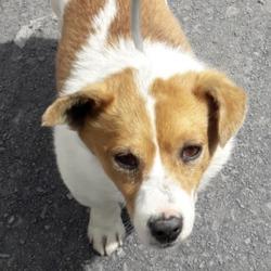 Reunited dog 08 Jul 2019 in Foxborough Est. UPDATE OWNER FOUND found, now in the dublin dog pound...Date Found: 06/07/2019 Location Found: Foxborough Est