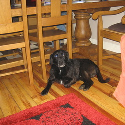 Found dog on 08 Mar 2010 in Crossakiel, Kells, Meath.. With respect to terrier cross, Male, found in Crossakiel, Kells, Meath, Please contact 046-9245192 at any time!