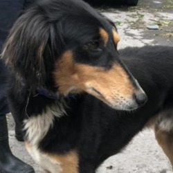 Found dog on 08 May 2019 in dublin_d. found in the dublin dog pound