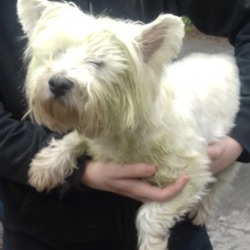 Reunited dog 08 May 2019 in Palmerstown Village. UPDATE REUNITED...found, now in the dublin dog pound..Date Found: