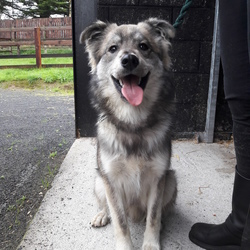 Found dog on 08 Sep 2018 in Carragh, Kildare. Found at the side of the road near carragh open farm.