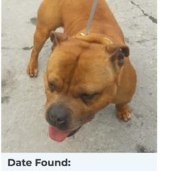 Found dog on 09 Apr 2018 in Palmerstown Woods, Clondalkin. found, now in the dublin dog pound...Date Found: 08/04/2018 Location Found: Palmerstown Woods, Clondalkin