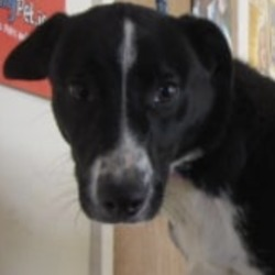 Found dog on 09 Dec 2019 in arklow. found..Wicklow Dog Pound 36 mins ·  George (Pound Name) is a male crossbreed fond in Arklow. For further information please call the Wicklow Dog Pound on 0404 44783. Thank you