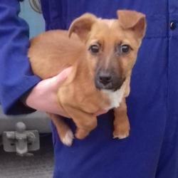 Found dog on 09 Jan 2018 in Tallaght , Village...... found, now in the dublin dog pound... Date Found: Monday, January 8, 2018 Location Found: Tallaght , Village