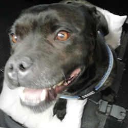 Reunited dog 09 Jun 2020 in hartstown. UPDATE REUNITED...found, contact meath dog pound...This happy little man was found yesterday between Ongar and Hartstown, he's about 5 years old microchipped but not registered correctly, very friendly, please share to help find his owner