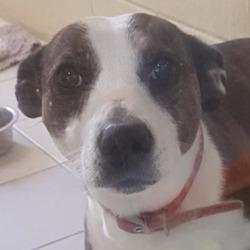 Found dog on 09 Jun 2021 in ashbourne. found..Dogs Trust Ireland Lost & Found Dogs tiSpon1tsorehdt  ·  Stray found last night in Ashbourne area. Any information please email reception@dogstrust.ie