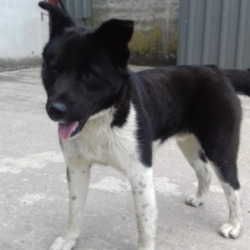 Found dog on 09 Jun 2021 in navan. found...Meath Dog Shelter dMatSnpgryr 31o anatiectgsot 12froe:isao21h PdM  ·  Ref 68 stray 🐕🐶GONE TO RESCUE🐩🐶 This lad was picked up in Navan, no collar or tag and not chipped. Proof of ownership and reclaim fee apply Contact 0870973911