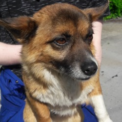 Found dog on 09 May 2018 in Tallaght Main St,.... found, now in the dublin dog pound..Date Found: 05/05/2018 Location Found: Tallaght Main St,