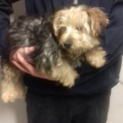 Found dog on 09 Nov 2018 in Tallaght Swiftbrook. found, now in the dublin dog pound..Date Found: 06/11/2018 Location Found: Tallaght Swiftbrook