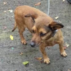 Found dog on 09 Oct 2018 in Cairnwood Tallaght. found, now in the dublin dog pound...Date Found:
