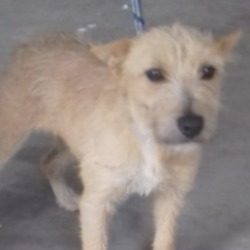 Found dog on 09 Oct 2018 in Hill of Ward Athboy Co.Meath. found...STRAY REF 250  Female Aprox 12 months  Terrier X No collar or chip FOUND Hill of Ward Athboy Co.Meath Any info please call 0870973911