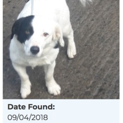 Reunited dog 10 Apr 2018 in Corkagh Park. UPDATE REUNITED....found, now in the dublin dog pound...Date Found: