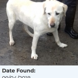Found dog on 10 Apr 2018 in Firhouse Road... found, now in the dublin dog pound..Date Found: 09/04/2018 Location Found: Firhouse Road