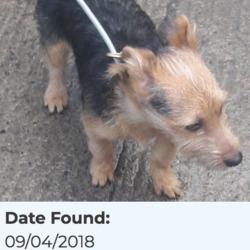 Found dog on 10 Apr 2018 in Palmerstown Village. found, now in the dublin dog pound...Date Found: 09/04/2018 Location Found: Palmerstown Village
