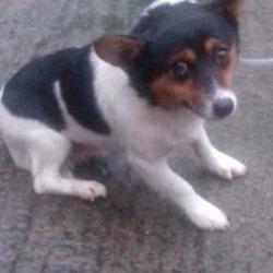 Found dog on 10 Dec 2018 in Greenogue Newcastle. found, now in the dublin dog pound...Date Found: 06/12/2018 Location Found: Greenogue Newcastle