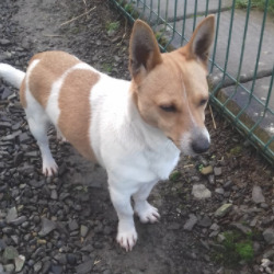 Found dog on 10 Dec 2020 in Kentstown . found...Meath Dog Shelter tSDecoemprubeoir n5snf rsSatoeto 11:odtn4gi9 ArMrdarecd  ·  Ref 199 stray NOT AVAILABLE FOR ADOPTION This little man was picked up in Kentstown yesterday, poor chap was weaving in traffic. No chip, no collar and no tag. Proof of ownership and reclaim fee apply Phone 0870973911