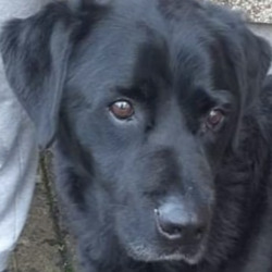 Reunited dog 10 Dec 2020 in navan. UPDATED REUNITED......Meath Dog Shelter