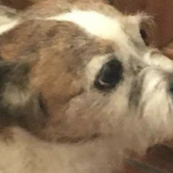 Found dog on 10 Feb 2019 in Donadea. found...K.W.W.S.P.C.A. 6 mins ·  FOUND NEAR DONADEA, CO KILDARE  This dog was found this morning near Donadea. Very well behaved - obviously comes from a good home.