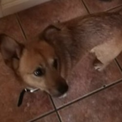 Found dog on 10 Jan 2020 in  PUNCHESTOWN . found..K.W.W.S.P.C.A.
