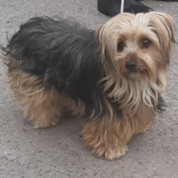 Found dog on 10 May 2020 in Templeogue. found, now in the dublin dog pound...Date Found: 06/05/2020 Location Found: Templeogue