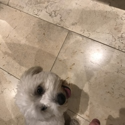 Found dog on 10 Oct 2018 in Killiney. Reunited 👍