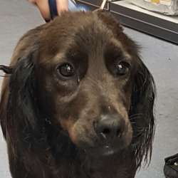 Found dog on 10 Sep 2019 in Sandyford Dublin.. found...DSPCA
