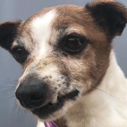 Found dog on 11 Apr 2019 in dublin.b. found, now in the dublin dog pound..