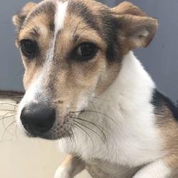 Found dog on 11 Apr 2019 in pound.d. found, now in the dublin dog pound..