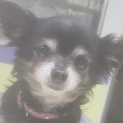 Found dog on 11 Feb 2019 in navan. found...Found emmet terrace navan anyone know this dog MDS Lost & Found Pets